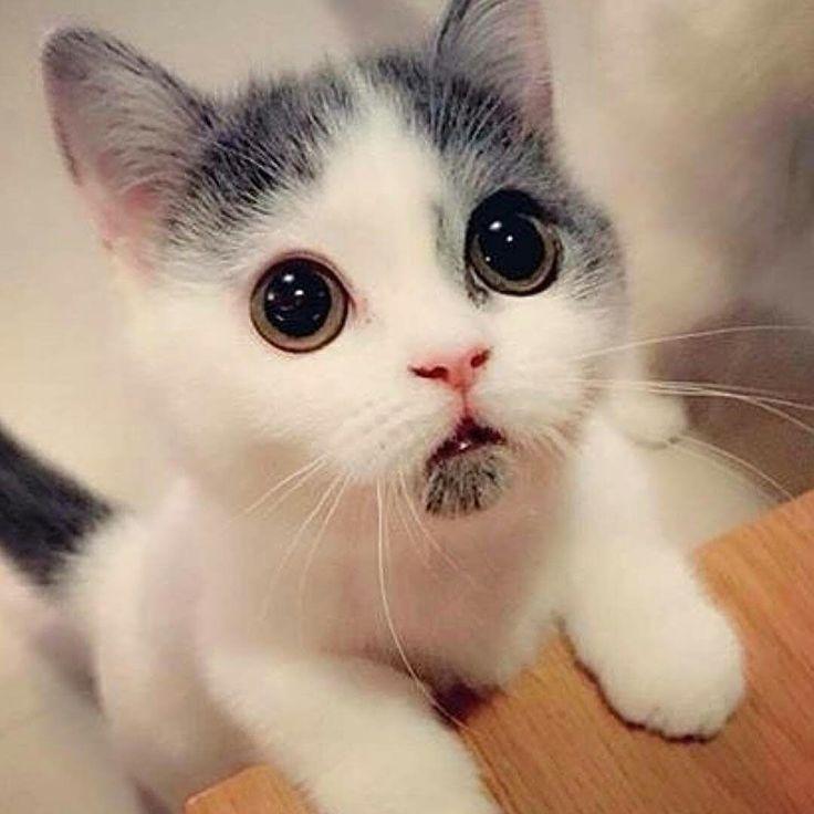 милые картинки с кошками пожалуйста эти лакомства