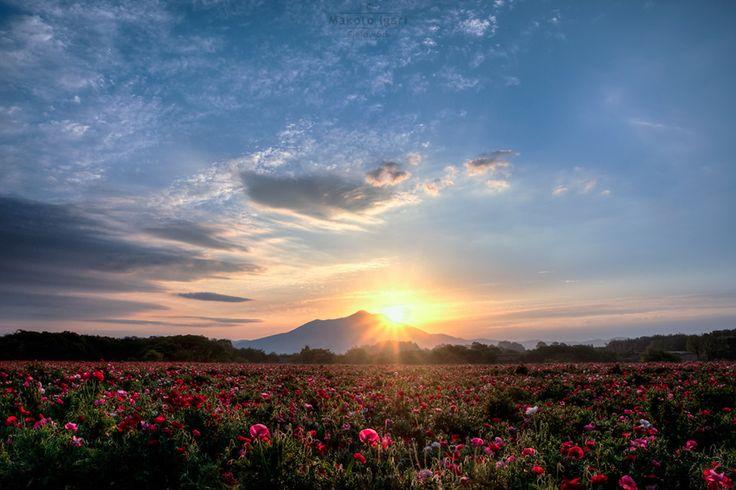 Wonderful place!200万本のポピーと筑波山