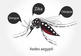 Resultado de imagen para imagenes del mosquito del dengue en caricatura
