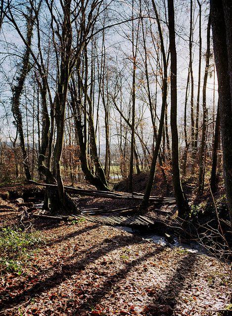 Black Forest. Schopfheim, Germany.