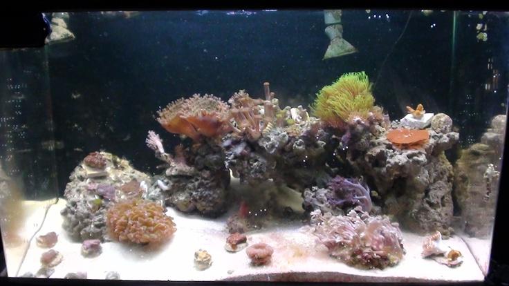 23 best freshwater fish aquarium images on pinterest fish 1 ecoxotic royal blue stunner strip hamilton power compact lighting fandeluxe Images