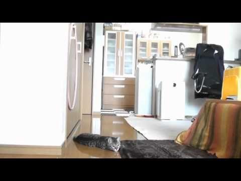 Um gato que parece um guarda-redes   Veja mais em: http://www.jacaesta.com/um-gato-que-parece-um-guarda-redes/