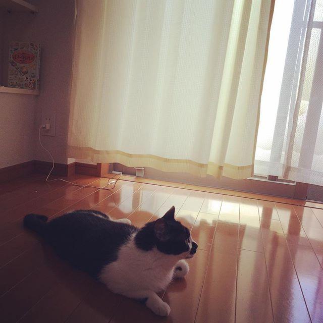 引越しました。 娘も新居の生活に慣れたようです。 今日も大変お暑いので、お体に気をつけて。  #ねこ#cat#catsagram#猫#ネコ#白黒#白黒はちわれ#はちわれ#はちわれ部#にゃんすたぐらむ#ねこ部#ねこ好きさんと繋がりたい#ねこ好き#もも#桃#桃ちゃん#ももちゃん#愛猫#にゃんこ部#引越し#引越し完了 #引越し祝い随時受付中