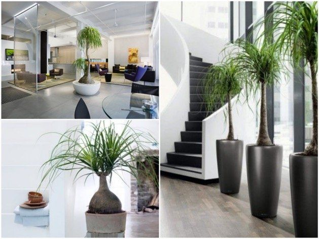 1000 id es sur le th me plante d 39 int rieur sur pinterest for Plante interieur deco