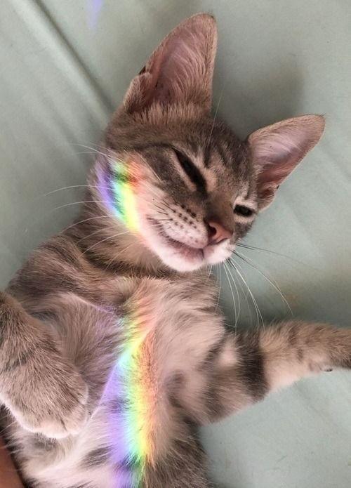 10 liebevolle, tolle Katzen zum Nationalen Katzentag   – Katzen Bilder