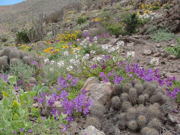 Regalo Divino  -  Desierto florido