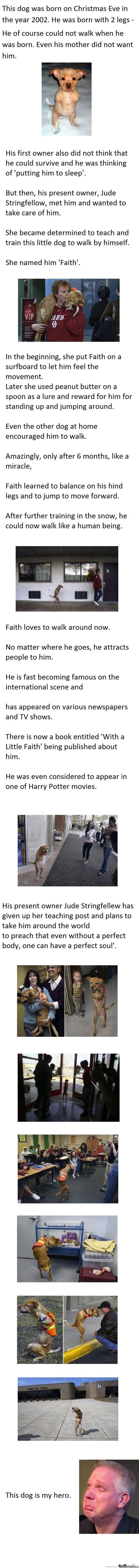 Faith The Dog - i love this story!
