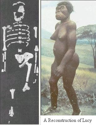 Lucy  es el conjunto de fragmentos óseos pertenecientes al esqueleto de un homínido de la especie Australopithecus afarensis, de 3,2 millones de años de antigüedad,2 descubierto por el estadounidense Donald Johanson el 24 de noviembre de 1974 a 159 km de Adís Abeba, Etiopía. Se trata del 40% del esqueleto de una hembra de alrededor de 1,10 metros de altura, de aproximadamente 27 kg de peso (en vida), de unos 20 años de edad (las muelas del juicio estaban recién salidas) y que al parec