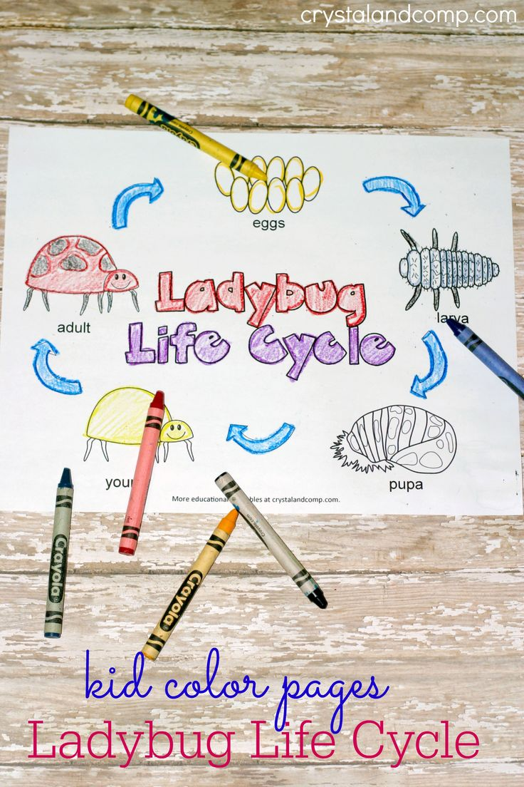232 best unit invertebrates images on pinterest preschool kid color pages ladybug life cycle robcynllc Gallery