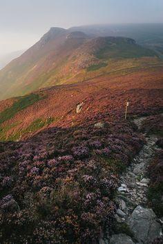 """archatlas: """" Isle of Man Purple Heather Bloom Mikael Buck """""""