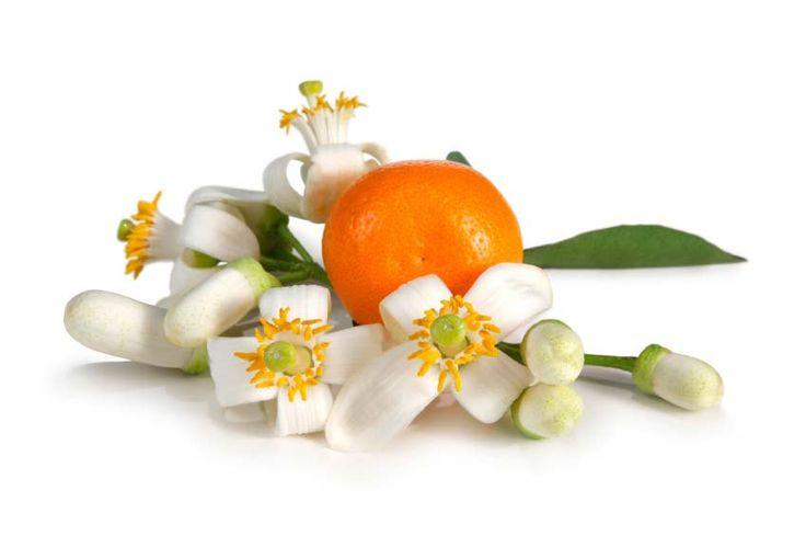 Neroli Fragrance Oil by AYOAOILS on Etsy