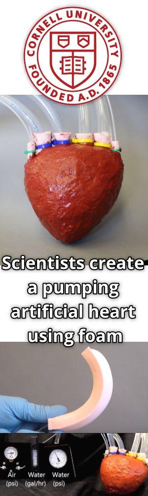 Scientists make an artificial heart out of foam. Köpükten yapay kalp üretildi