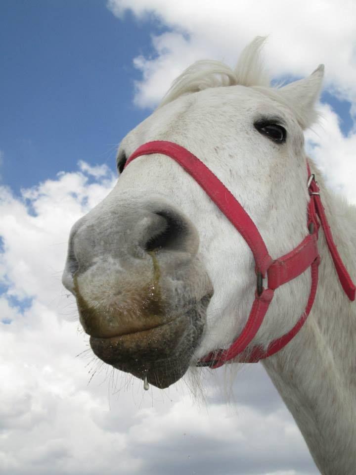 Yadira! #Horse #caballo