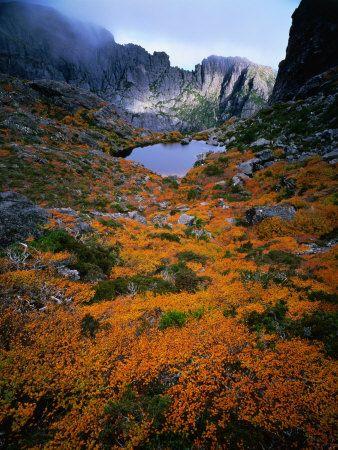 Deciduous Beech on Tasmania's West Coast Range, Tasmania, Australia