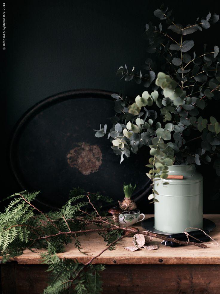 Vackraste julväxterna går i grönt, från frostigt grågröna eucalypthuskvistar till mörkaste mossa. SOCKER vas.