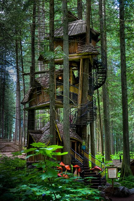 Tallest Tree House In BC by Keith Watson aka Keith Watson, via Flickr