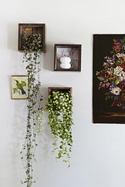 shadow box + plants with vines
