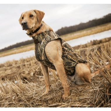8 No-Brainer Hunting Dog Gear Picks [PICS] - Wide Open Spaces
