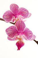 Beautiful Mini Orchid