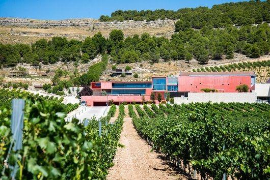 En colaboración con una bodega de Ribera del Duero, investigadores de la Universidad Politécnica de Madrid y de la Universidad de Valencia han conseguido elaborar un vino libre de histamina. Esta sustancia está implicada en respuestas del sistema inm