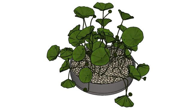 Large preview of 3D Model of Decorative Plant