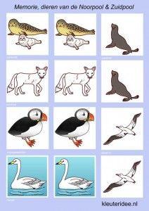 Memorie voor kleuters, dieren van de Noordpool en Zuidpool 2, kleuteridee.nl , Memorygame arctic animals, free printable.