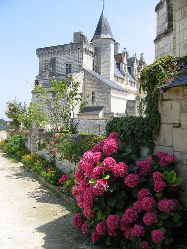 Beautiful hydrangea lined street in Montsoreau, Pays de la Loire, France | Flickr/Audrey ᘡղbᘠ