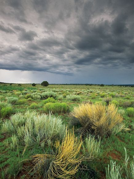 Storm Clouds and Sage, New Mexico  Photograph by Phil Schermeister, National Geographic