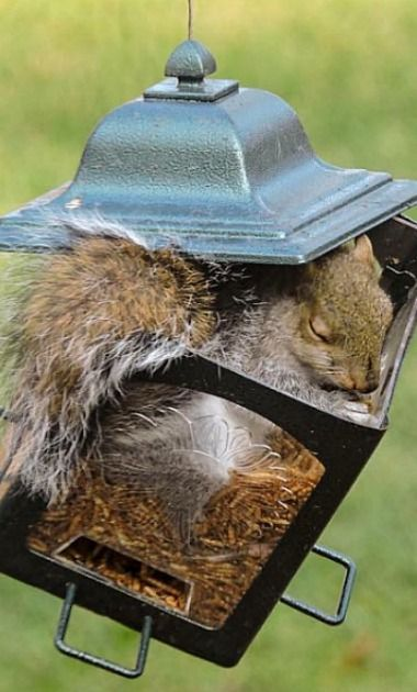"Why do people get so upset when squirrels get the birdseed?  ""squirrels need to eat too. Love this little darling."