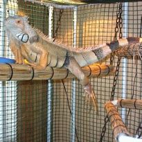 Plans For Building An Iguana Cage