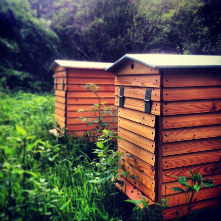 #Bees #BeeHives #Nature