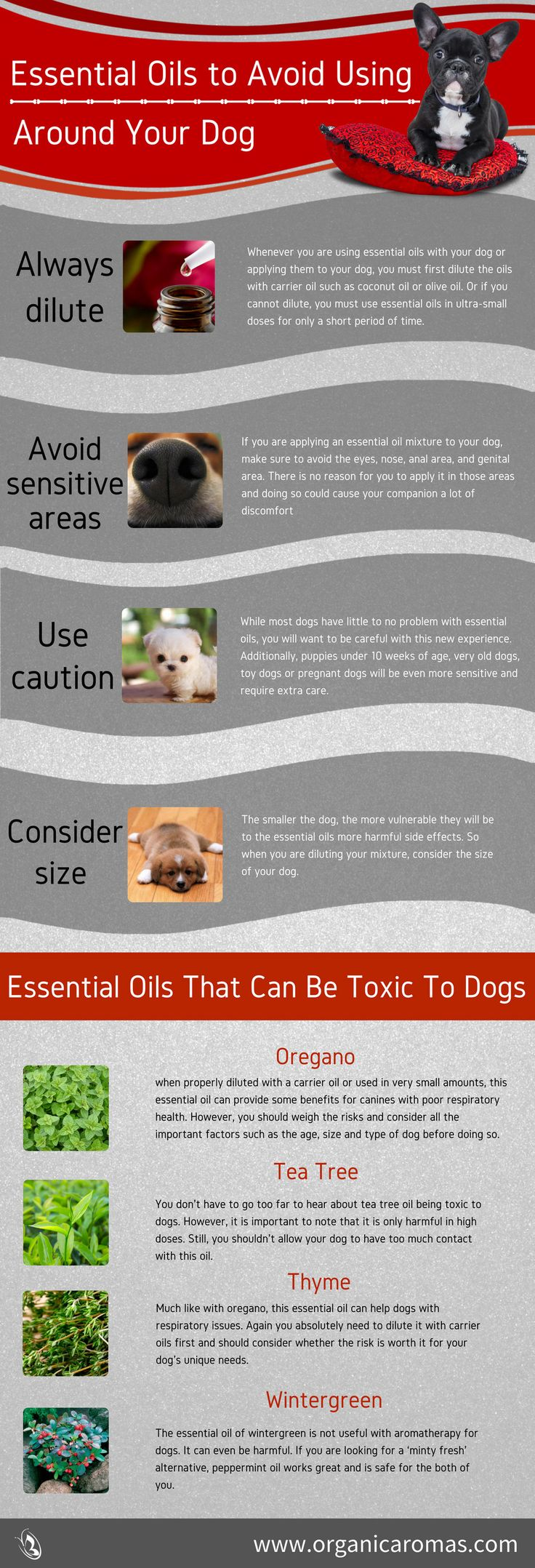Essential Oils to Avoid around Your Dog Info-graphic. Learn what oils can be harmful around your fur babies and what areas to avoid for their benefit.