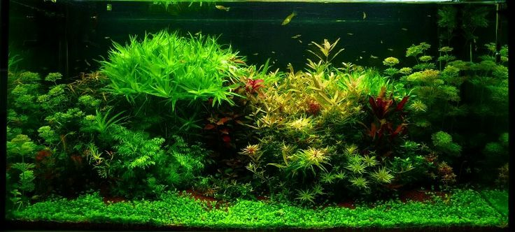 planted aquariums terrariums aquarium scapes aquarium art aquarium ...