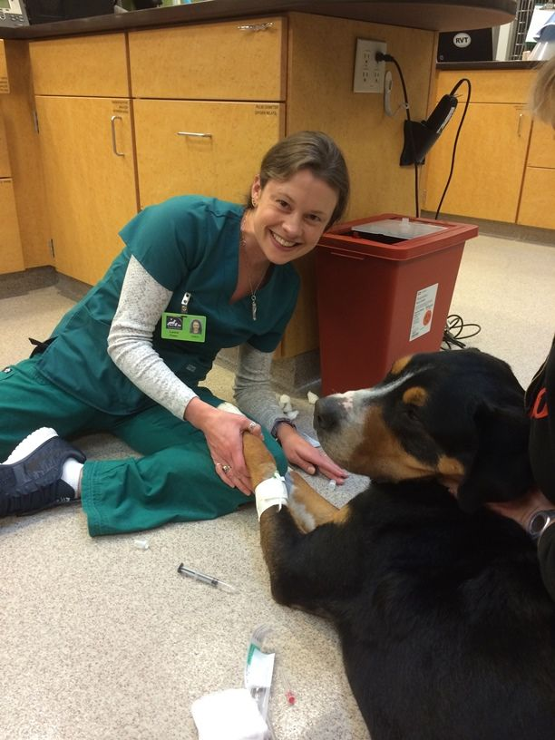 Encouraging article for new vet techs/students. Don't give up!