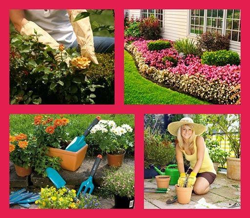 Бережный уход за растениями круглый год
