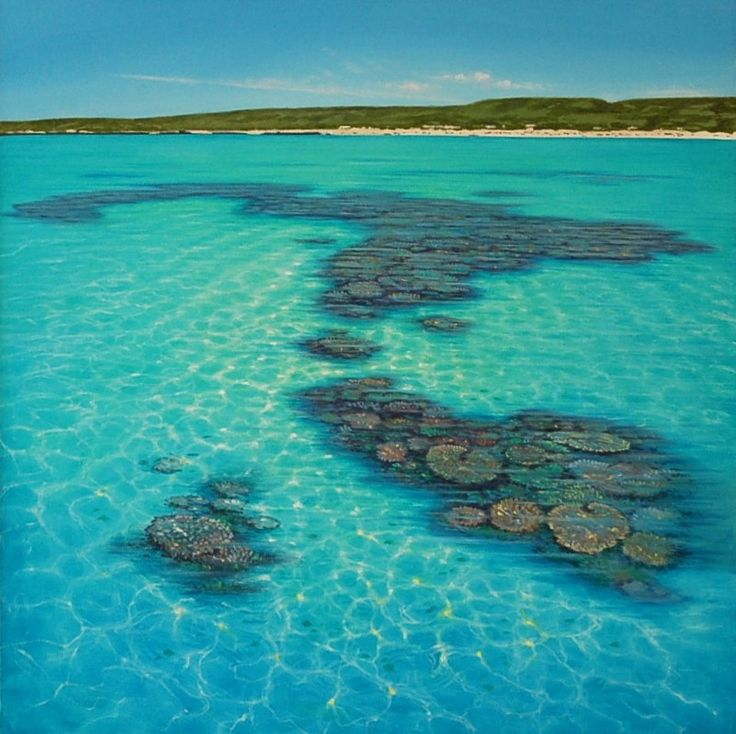 Ningaloo Reef, Western Australia ... This is the most amazing place I have ever…