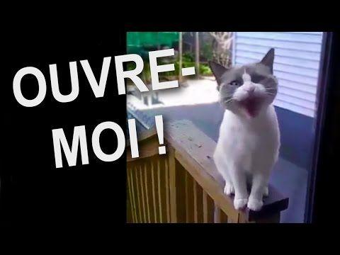 Un chat qui parle français! #mignon