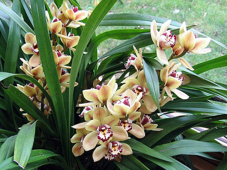 Où installer son orchidée?