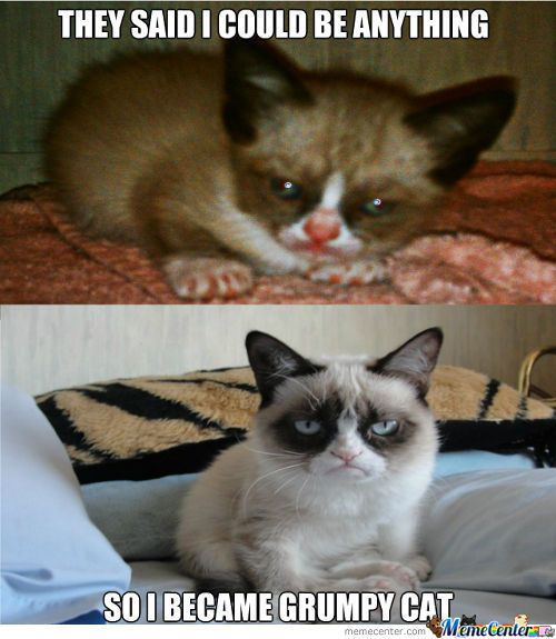 Ah, so THAT'S how Grumpy Cat became Grumpy Cat. Thanks to my great foster Mom…