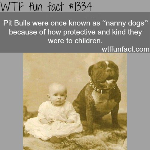 pit bulls - nanny dogs / animals facts MORE OF WTF FACTS are coming HERE animals, movies and fun facts
