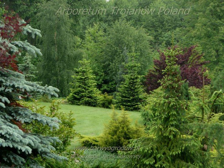 Arboretum Trojanów Poland Maj May