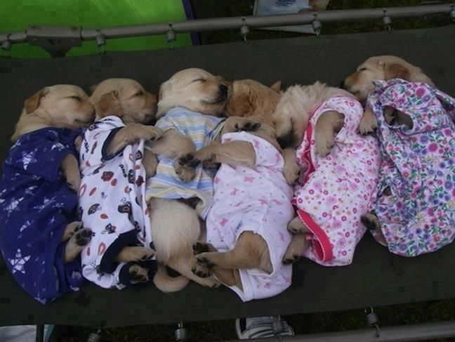 Street Dog family.