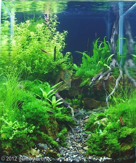 2012 AGA Aquascaping Contest - Entry #347