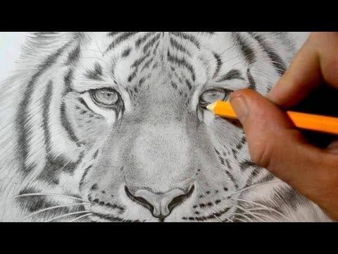 ▶ How to Draw a Tiger - Realistic Pencil Drawing - YouTube