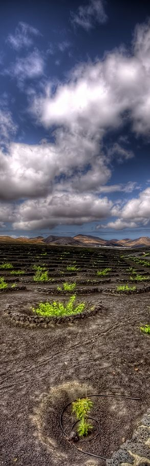 Vineyards, Lanzarote, Canary Islands, Spain