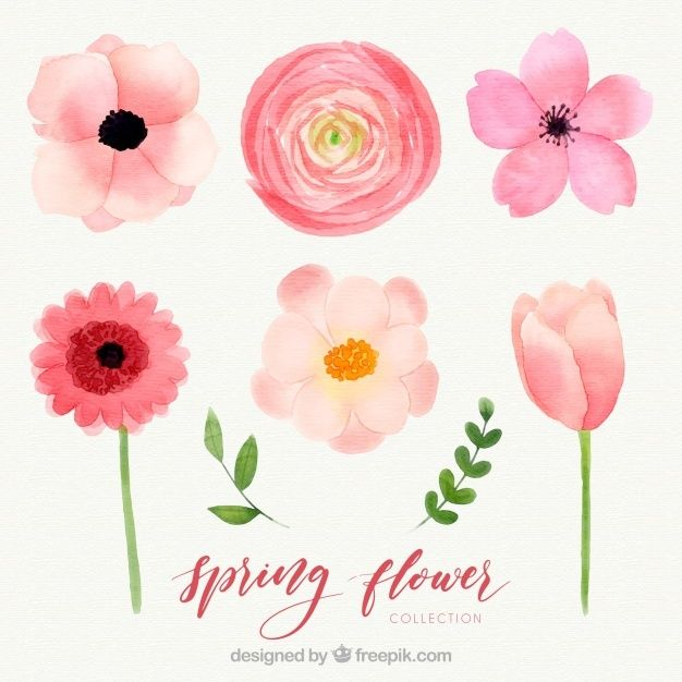 Free Watercolor Spring Flower Collection Svg Dxf Eps Png Floral