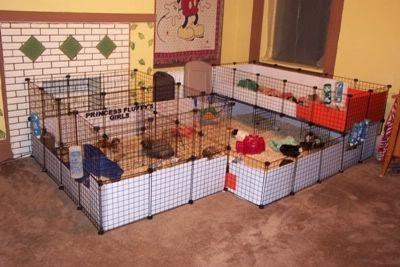 104 best hedgehog cage images on pinterest for 2 story guinea pig cages for sale