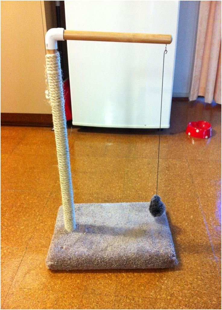 This one looks cool for the cat. I can also get probably everything from work.  Top 10 Fun DIY Cat Toys