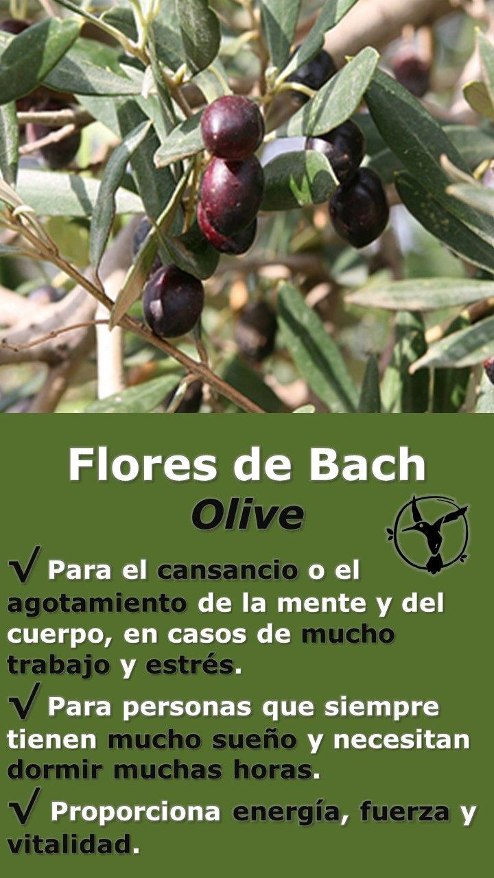 #flores #de #bach #agotamiento #estres #sueño #dormir #energia #vitalidad #fuerza #beneficios #en #español #olive #olivo #remedies #remedios #salud #terapia #terapias #alternativas