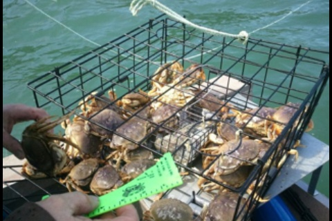 1000 images about crabbing on pinterest for Crab fishing oregon